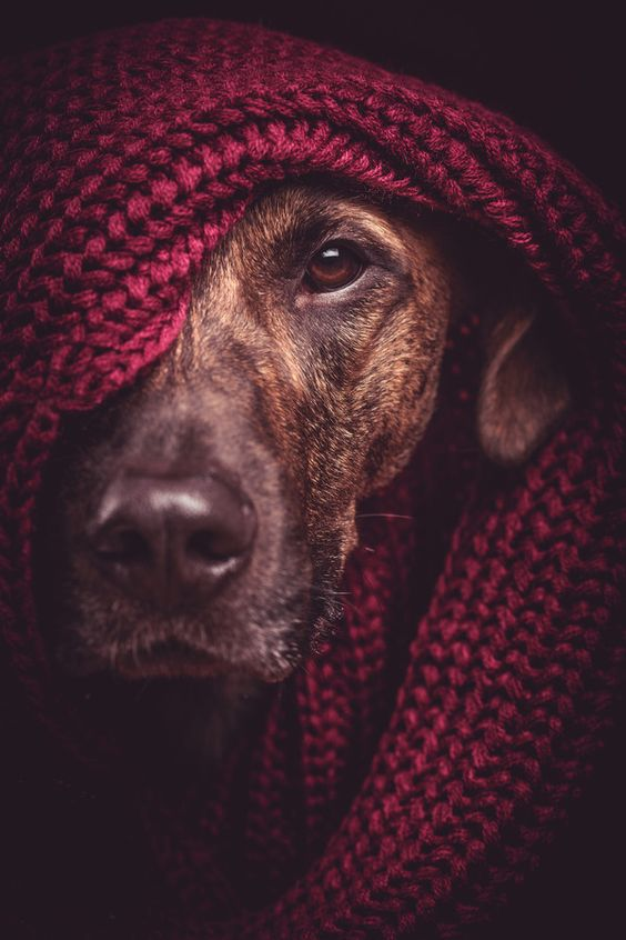 Pet Photography Contest