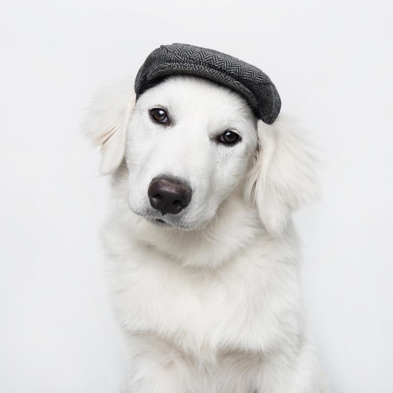 Pet Photographer Denver