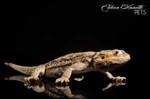 Lizard Portraits